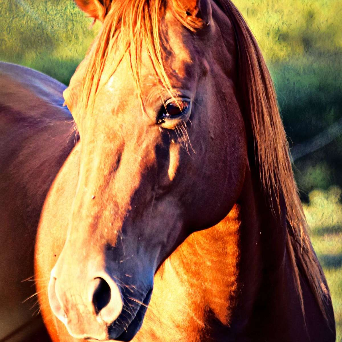 Justman Performance Horses