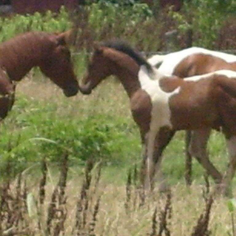A Bar 7 Quarter Horses