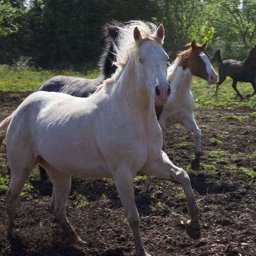 Equutrails Horseback Riding