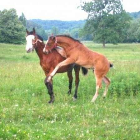 Balmez Horses