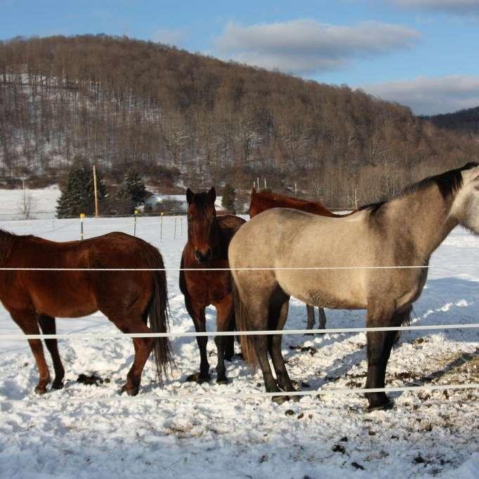 Milestone Equine Farm  Transport
