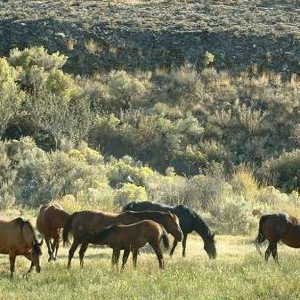 Jameson Lake Quarter Horses