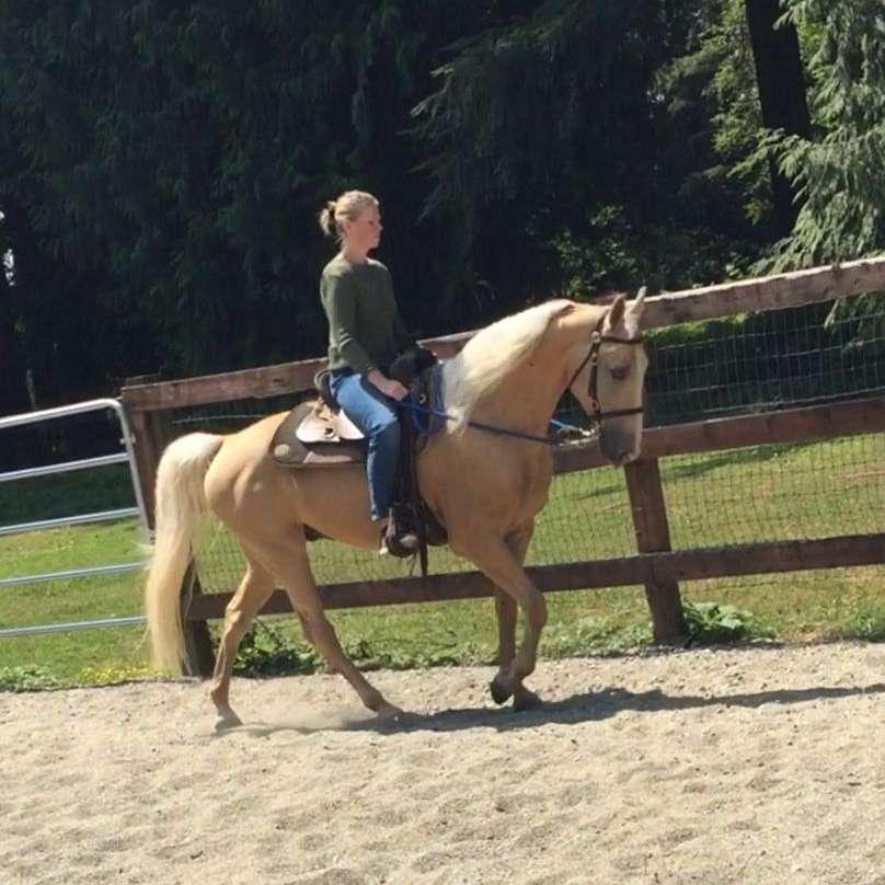 Rendition Horse Farm