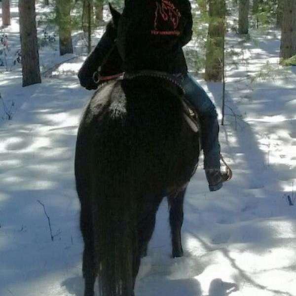 Giddy Up Horsemanship