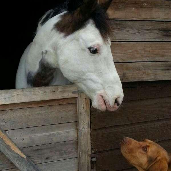 Macero horsemanship  training