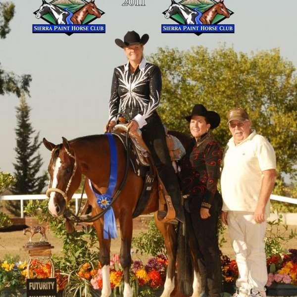 Gullion Show Horses