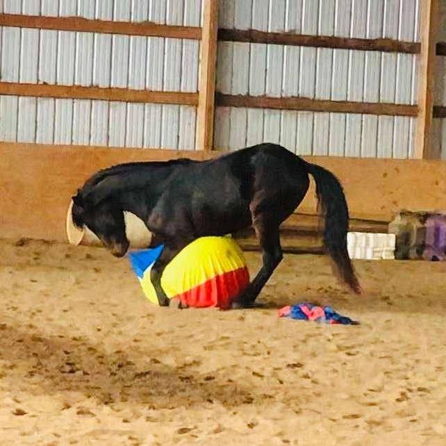 Equine Unity