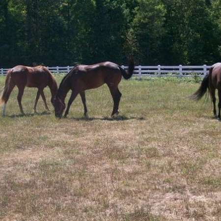 Lazy S Performance Horses
