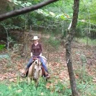 Bear Creek Horses and Saddles