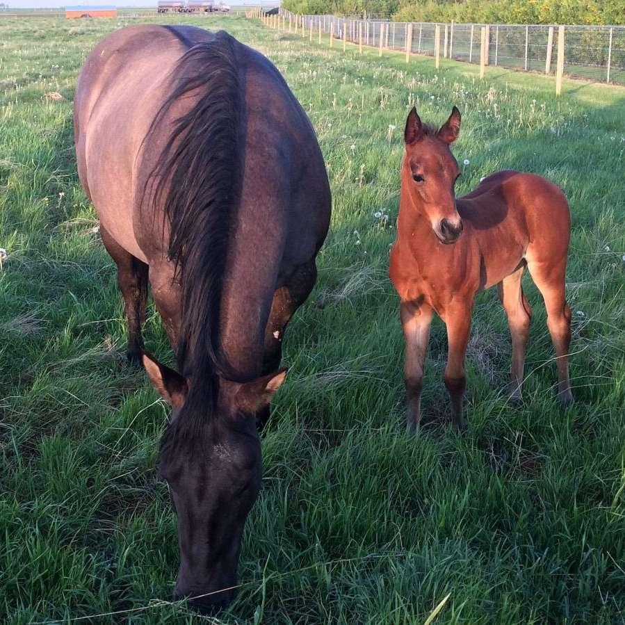 JETTS Quarter Horses