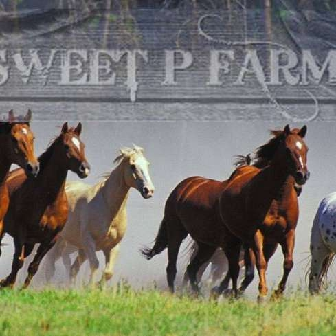 Sweet P Farm - Closed to Public