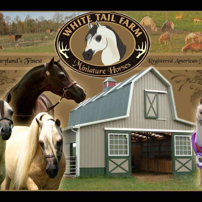 White Tail Farm