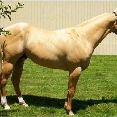 Red Rock Performance Horse