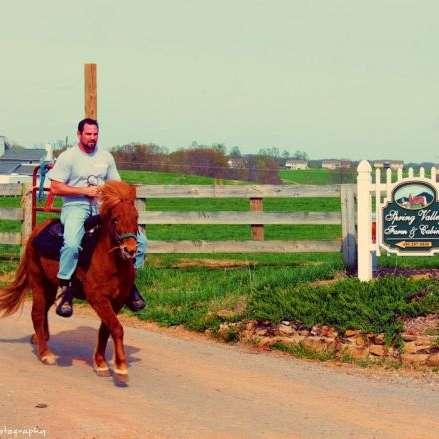 Spring Valley Horse Farm