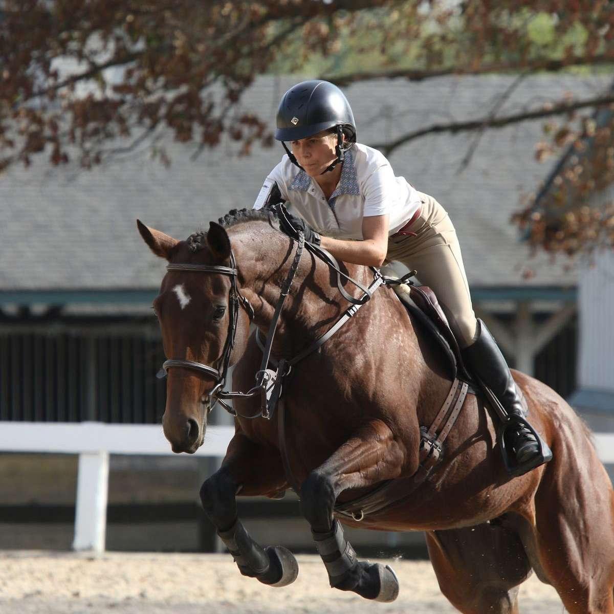 Transitions Sport Horses