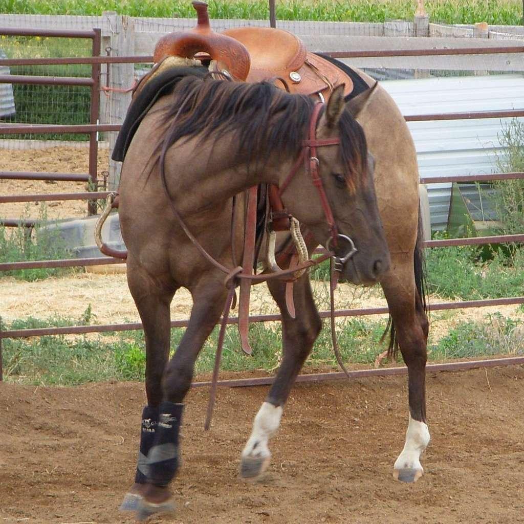 Sunrise Performance Horses