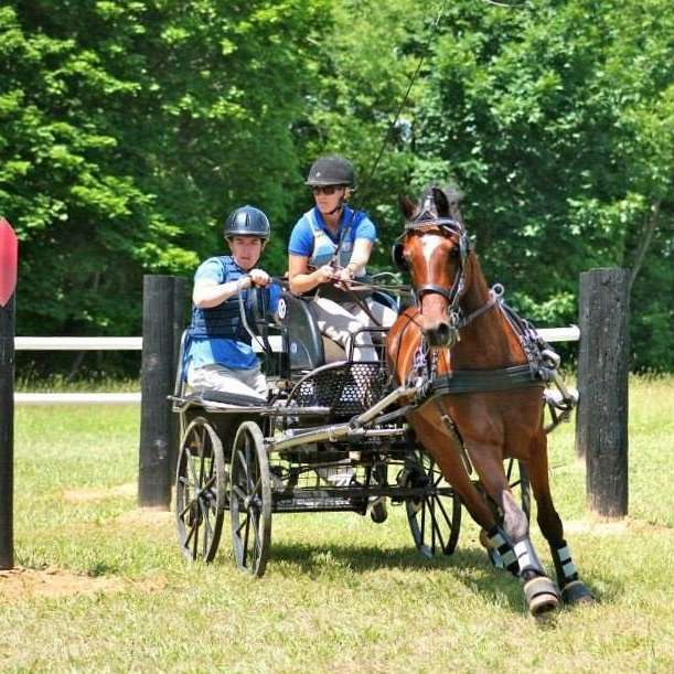Lind Carriage Training