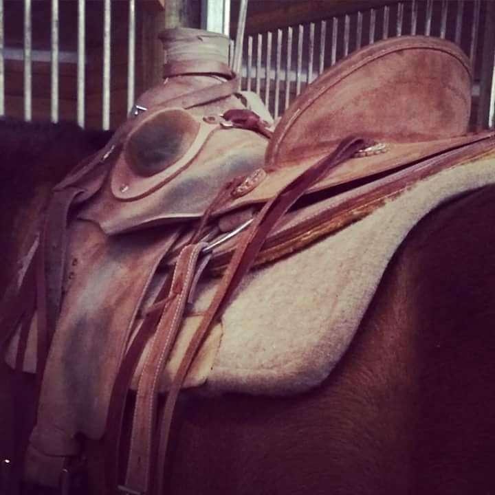 Bighorn Equestrian