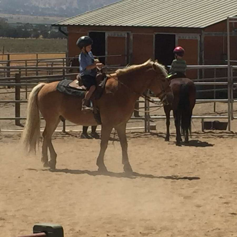 RJ Training Stables