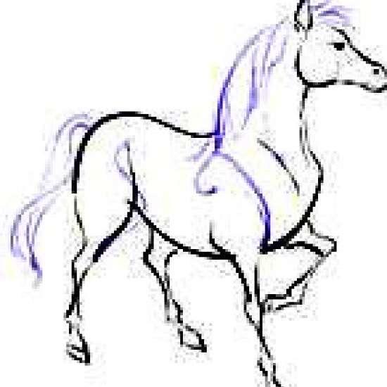 Forgotten Treasures Equine Rescue