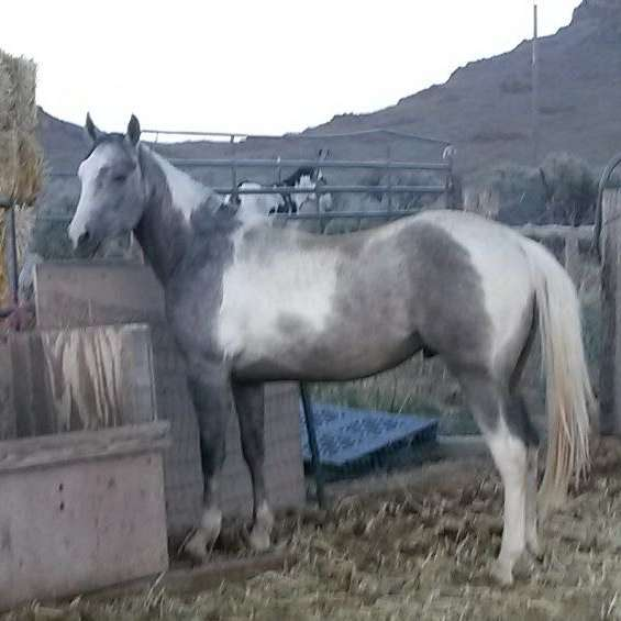Horsesnstuff4sale