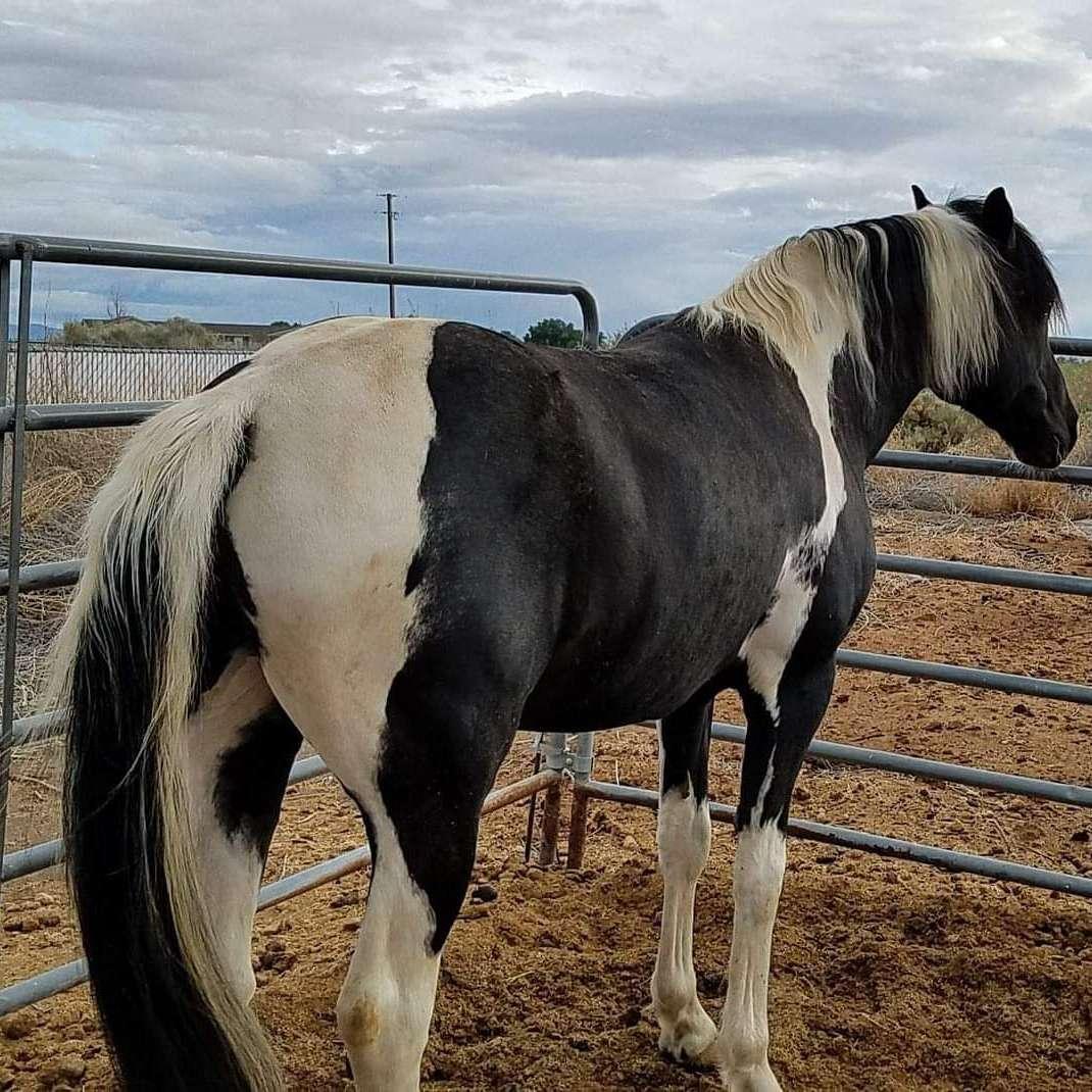 Horsesnstuff4sale