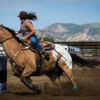 Crown L Performance horses
