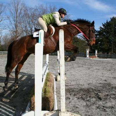 Anna Welch Equine, LLC