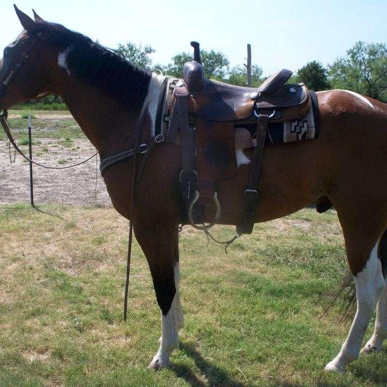 www.horses4u.net