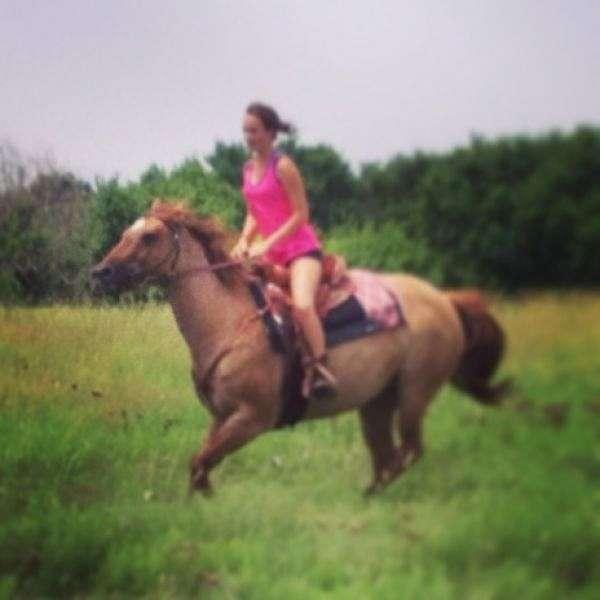 Rnl Ranch Horses