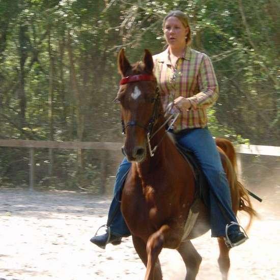 Stephanie Lynn Performance Horses