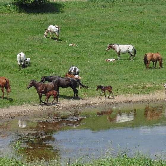Mordan Ranch