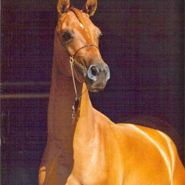 Michele's horse heaven