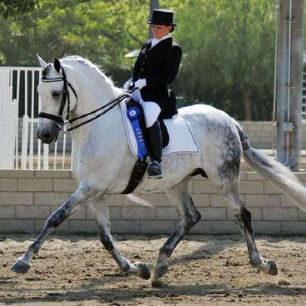 Baroque Equus