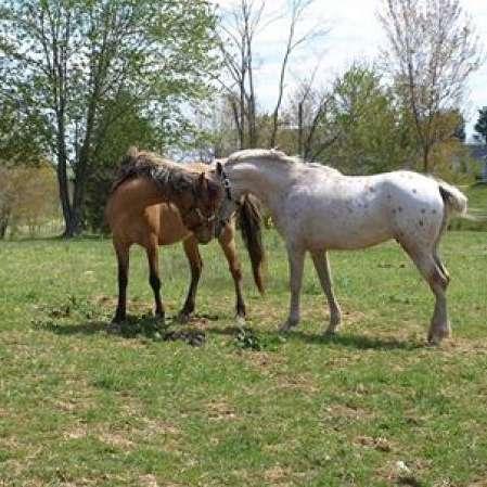 Legacy Horse Farm Ltd.