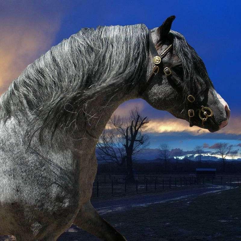 Blue Ridge Welsh Pony Farm LLC