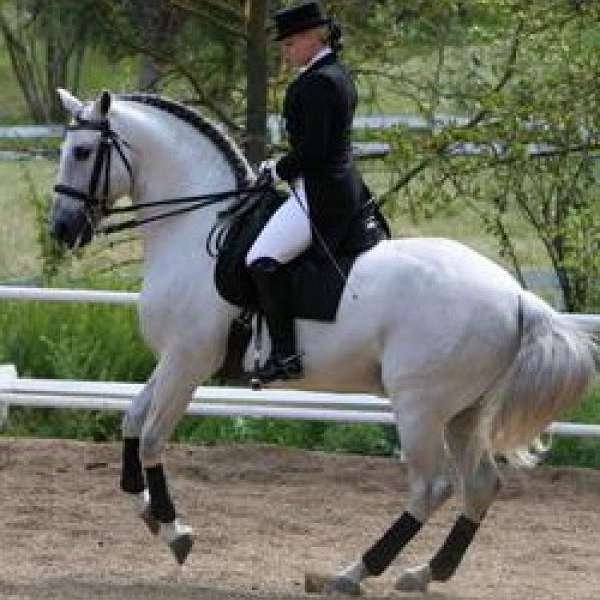 Provenance Dressage