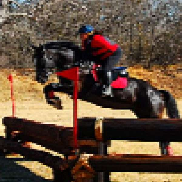 Capriole School of Riding