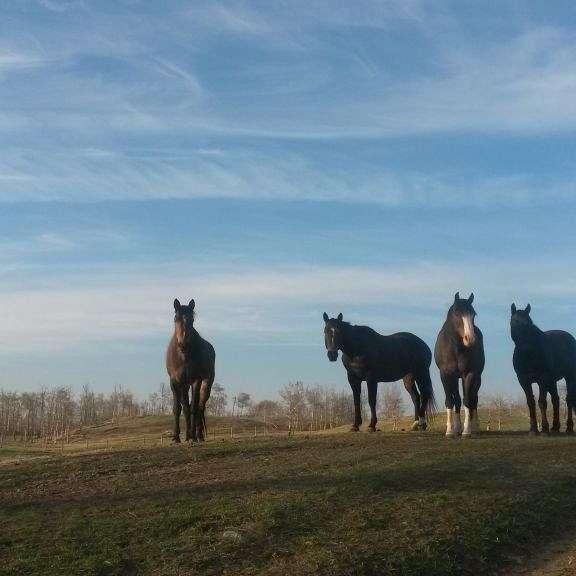 McKendrick Horse Ranch
