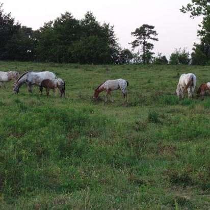 Spirit Horse Hill