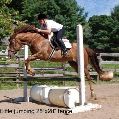 LK Horse Training