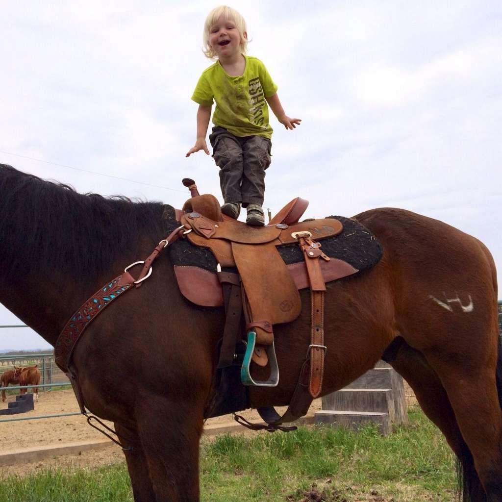 VHD Performance Horses