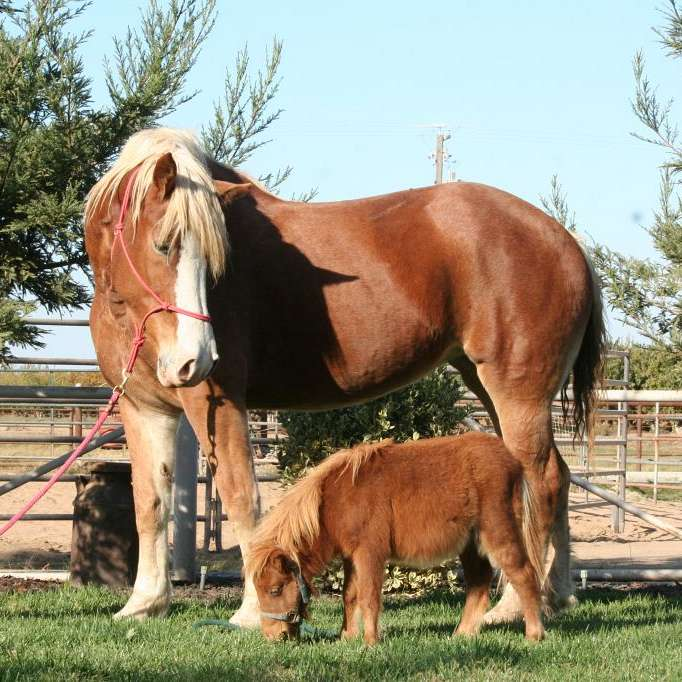 Oakdale Equine Rescue