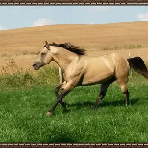Silverthorn Ranch