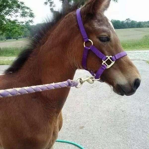 Heartland Equine Rescue