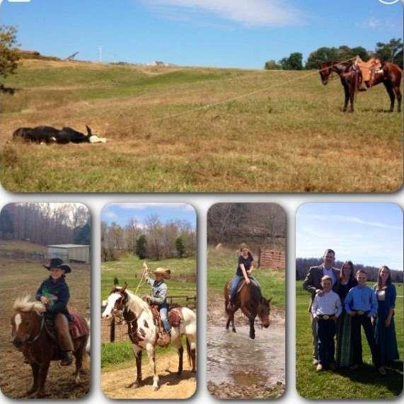 Quarter Circle D Horses