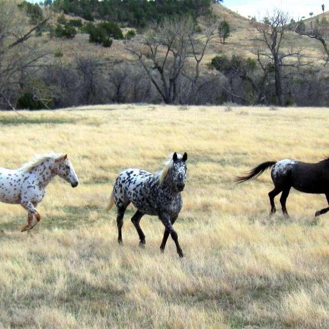 keenan ranch