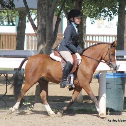Ashley Mason Sport Ponies