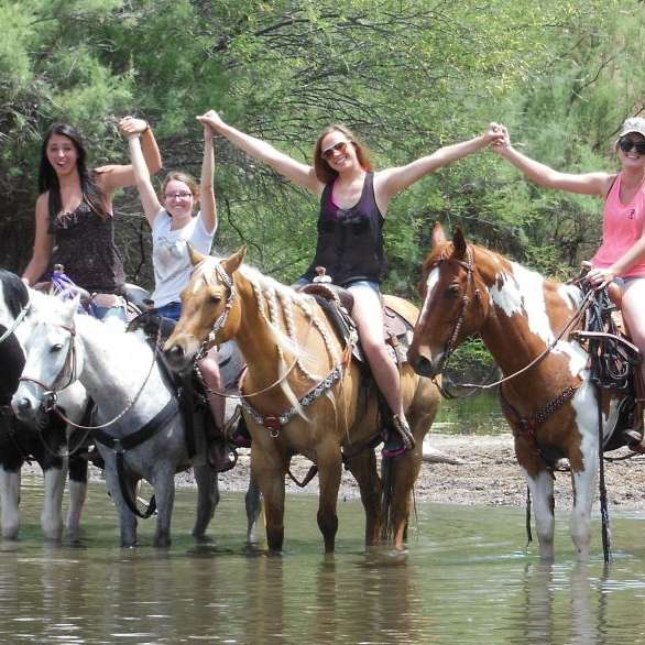 Super Gentle Horses