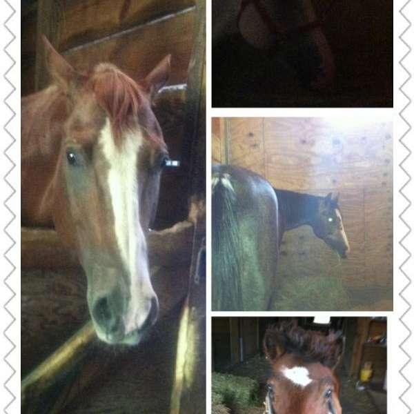 Double R Horses